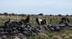 I also came across this couple of ponies